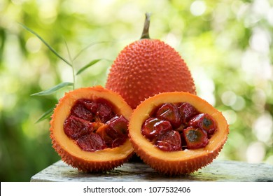 gac fruit  has medicinal properties.