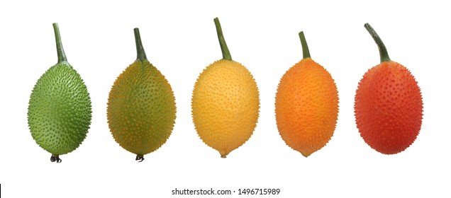 Gac fruit isolated on white background. Oval shape with small spike. When raw has green color & red when ripe. Rich in Lycopene, Beta-Carotene, Calcium & Vitamin C.