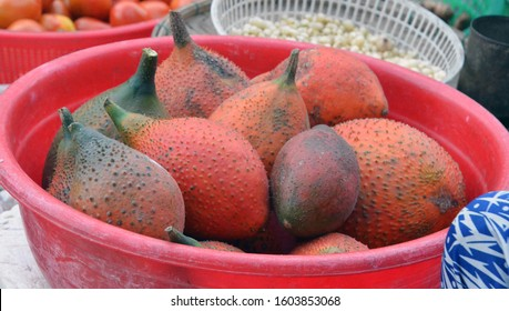 Gac fruit (Momordica cochinchinensis), also known as Baby Jackfruit or Cochinchin Gourd, is a bright orange spikey fruit found in Southeast Asia