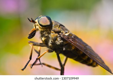 Gadfly – winged insects whose larvae feed on mammals.