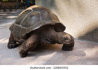Gain tortoise at the tropical islands of the Seychelles