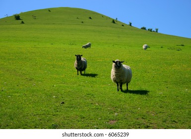 I gained the attention of a couple of sheep on a rounded green hill.