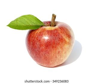 Gala, Apfel, Malus domestica,