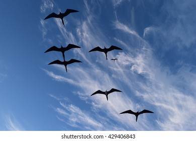 Galapagos birds in flight