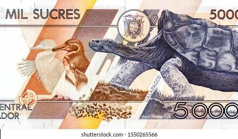 "Ecuador 5000 Sucres Banknote /""Giant Tortoise/"" Animal paper money Galapagos"