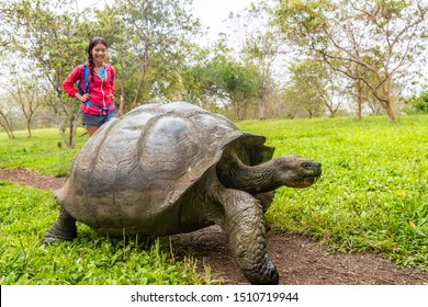 Galapagos Giant Tortoise and woman tourist on Santa Cruz Island in Galapagos Islands. Animals, nature and wildlife photo close up of tortoise in the highlands of Galapagos, Ecuador, South America.