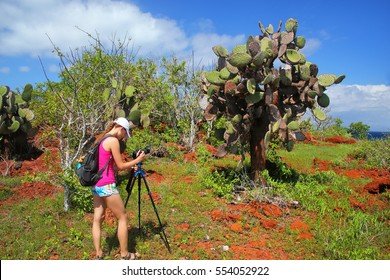 GalapagosWoman photographing prickly pear on Rabida Island in Galapagos National Park, Ecuador. It is endemic to the Galapagos Islands.