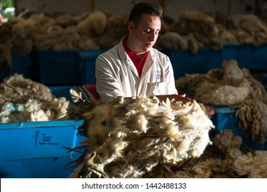 Galashiels, Scottish Borders, UK. 25th June 2019. The British Wool grading depot at Galashiels enters it's peak summer season as premium sheep fleeces come in from the Border hills.