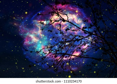 Galaxy on night sky back silhouette dry tree, Elements of this image furnished by NASA