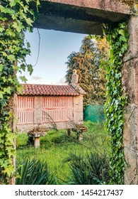 Galician horreo, traditional farming granary framed by a door with ivy