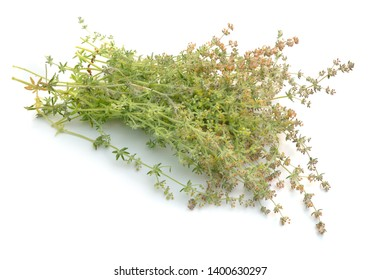 Galium humifusum or spreading bedstraw isolated on white