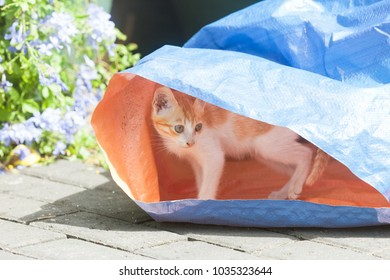 Galle, Sri Lanka, Asia - A young cat hiding under a piece of canvas