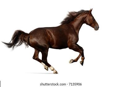 gallop horse.