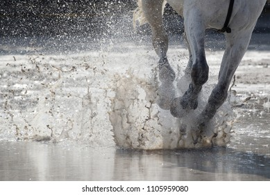 Gallop in the water