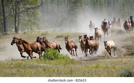 Galloping Horse Herd