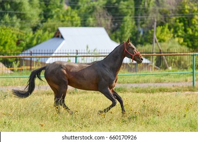 A galloping horse on a green meadow