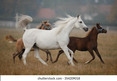 Galloping horses on the autumn pasture