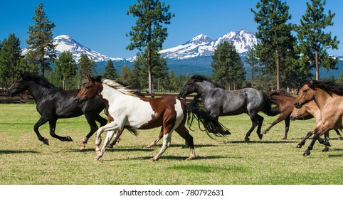 Galloping horses and three sisters mountains near Sisters, Oregon