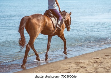 Galloping on a horse of the sea at sunny day