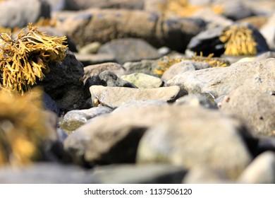 Galway Bay Stones