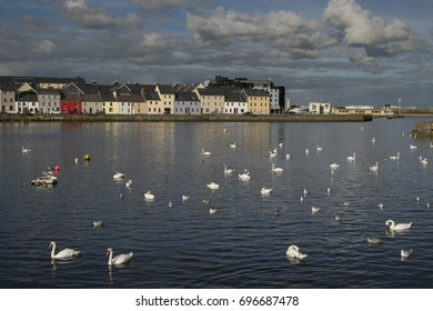 GALWAY, IRELAND - AUGUST 13, 2017: Group of swans on the Claddagh, the most popular as well as historical part of Galway city.