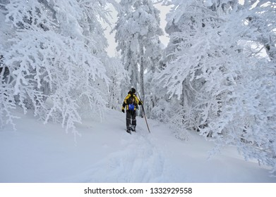 Gambarie, Reggio Calabria district, Calabria, Italy - January, 10, 2017: Hiker among the frozen trees on Mount Scirocco 1660 mt