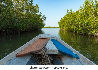 Gambia Mangroves. Traditional long boat. Green mangrove trees in forest. Gambia.