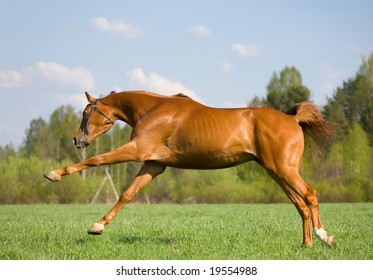 game of chestnut horse in field