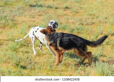 games two dogs german shepherd dalmatian stock photo edit now