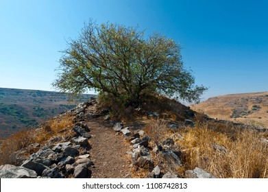 Gamla Israel Images, Stock Photos & Vectors | Shutterstock