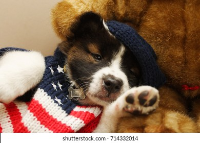 Gangster hip hop puppy with American flag cloth sleep with teddy bear