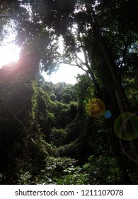 gap cleearance on a forest with sunlight flairs