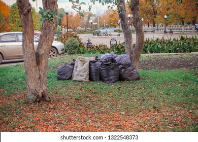 garbage bags after cleaning stand by the tree