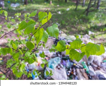Garbage in the birch forest after holydays picnics