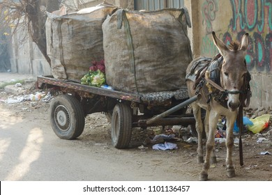 Garbage collection cart in Cairo, Egypt – Donkey driven carts are main collection mechanism in the City