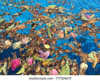 Garbage in swimming pool.