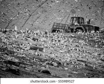 Garbage truck stirring trash at the dump