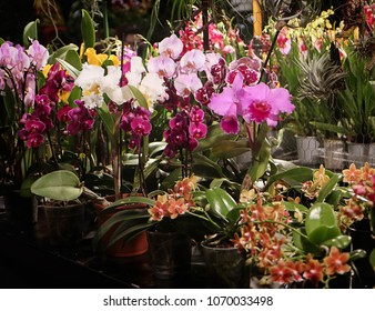 "GARCHING, GERMANY - APRIL 13, 2018 - Beautiful orchid plants at the special exhibition ""Orchids fascination"" organized by the Munich group of the German orchids association."