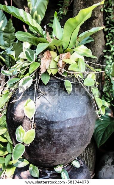 Garden adorned with jars