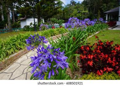 Garden in Agro Technology Park in MARDI Cameron Highland Malaysia