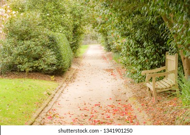 Garden alley and wooden bench in the typical plantation of South Carolina, USA