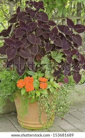Garden Arrangement With Variety Of Plants, Including Coleus, In Summer
