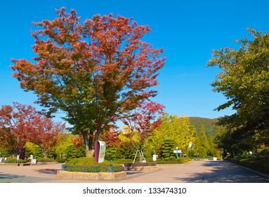 Garden with autumn season scenery.