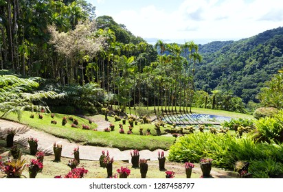 The garden of Balata .The Balata is a botanical garden located on the Route de Balata about 10 km outside of Fort-de-France, Martinique, France.