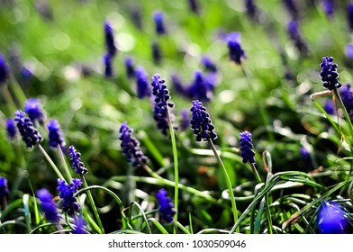garden bed of blue small flowers on a background of green grass, concept for a blog of floral designers garden garden designers