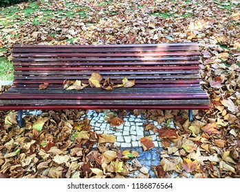 Garden bench with autumn leaves with great colors