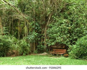garden bench in the Botanic Garden in Cairns, Queensland (Australia)