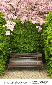 Garden bench under arch created by blossoming kwanzan cherry in Brussels, Belgium