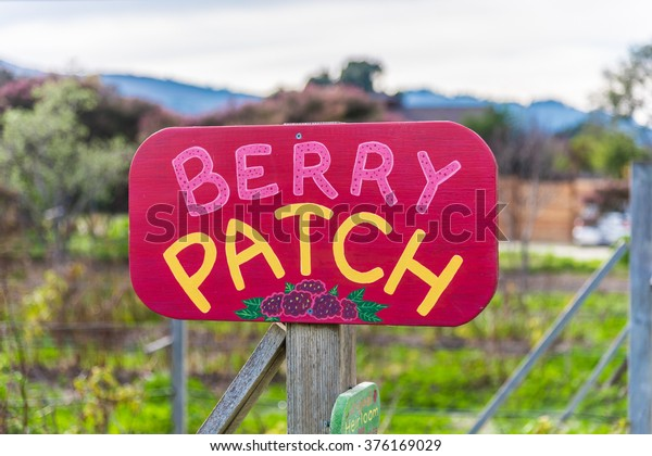 """A garden of berries is marked with a colorful """"Berry Patch"""" sign, in Carmel Valley of Monterey County, California."""