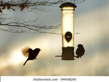 Garden birds by a bird feeder in winter